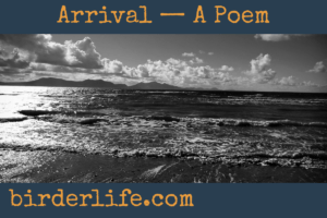 arrival-a-poem