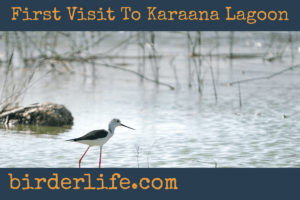 first-visit-to-karaana-lagoon