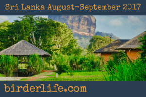 sri-lanka-august-september-2017