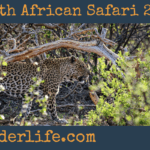 South African Safari 2016