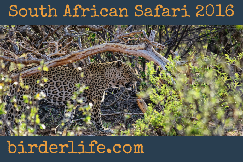 south-africansafari-2016