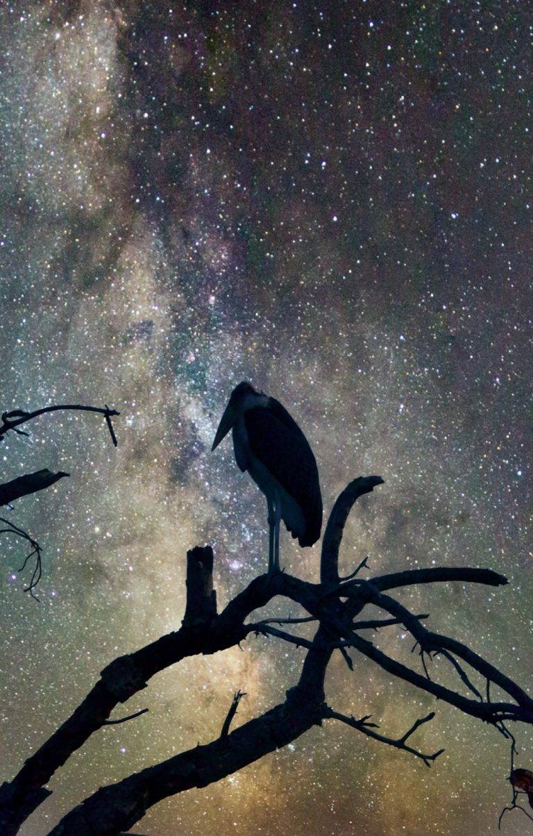 marabour-stork-and-milky-way