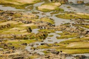 animals-graze-on-the-river-bed