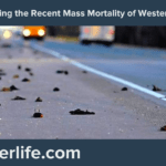 Explaining the Recent Mass Mortality of Western Birds