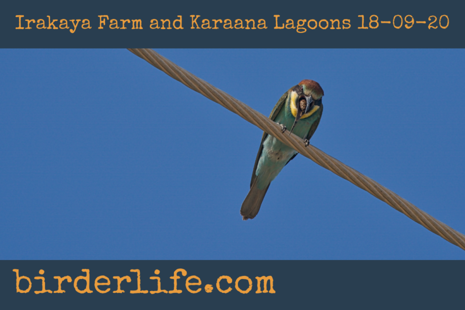 Irakaya-Farm-and-Karaana-Lagoons-18-09-20