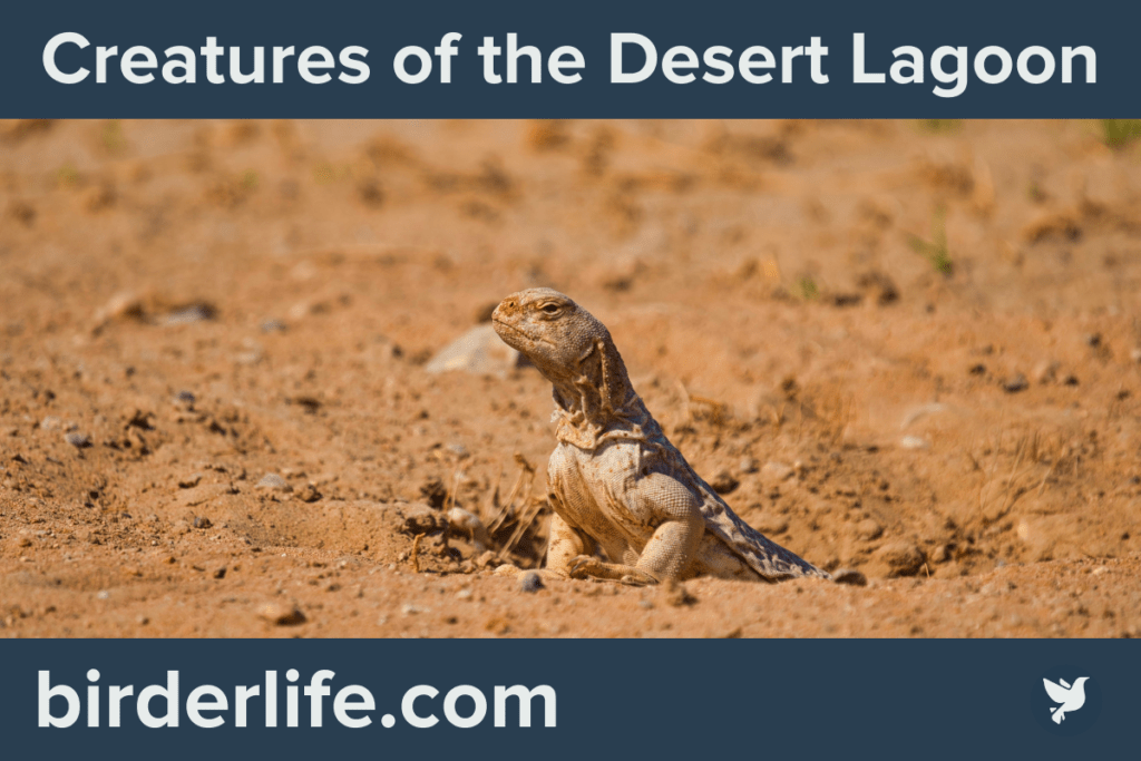 Creatures of the Desert Lagoon