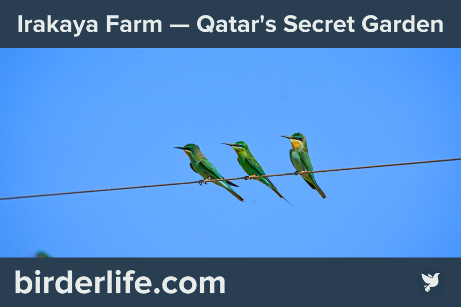 Irakaya Farm -Qatar's-Secret-Garden