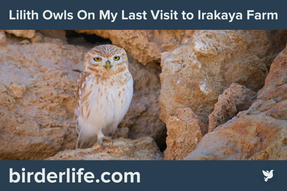 Lilith-Owl-On-My-Last-Visit-to-Irakaya-Farm